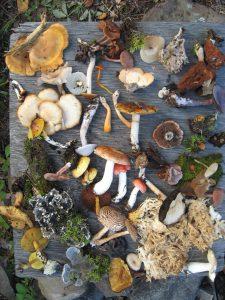 Fungi_of_Saskatchewan